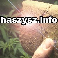 haszysz, marihuana, cannabis