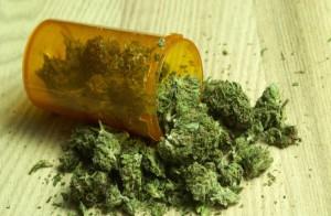 Czy kruszenie marihuany sprawi, że THC dostanie się do organizmu?, haszysz.info
