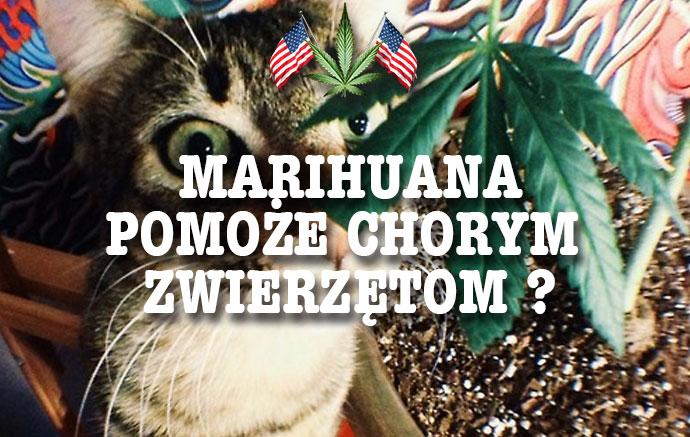 Marihuana Pomoże Chorym Zwierzętom?, haszysz.info