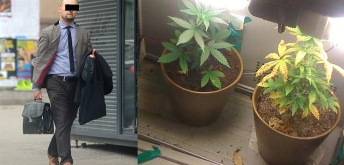 Dyrektor ZUS hodował marihuanę w piwnicy, haszysz.info