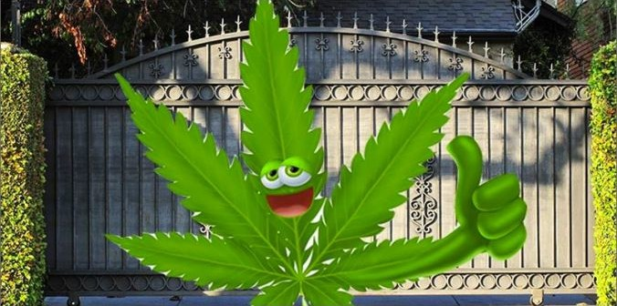 Badania Potwierdzają: Marihuana Nie Jest Bramą do Narkotyków, haszysz.info