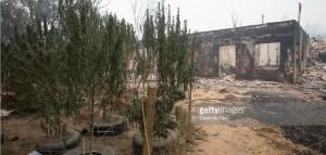 Kalifornia: Przychodnie oferują darmową marihuanę dla ofiar pożarów, haszysz.info