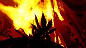 """Indianie palą swoje uprawy   jednak nie zaproszą na """"wczasy z marihuaną""""?, haszysz.info"""