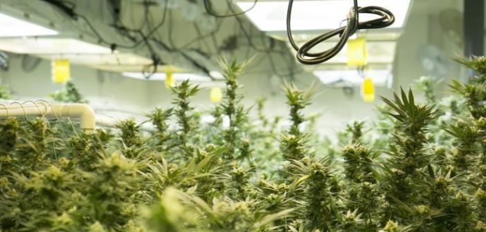 Hodowcy Marihuany w USA Zużywają Prąd o Wartości 6mld Euro Rocznie, haszysz.info