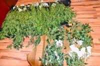 Uprawa marihuany w... wieżowcu, haszysz.info