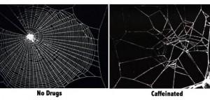Jak narkotyki wpływają na pająki?, haszysz.info
