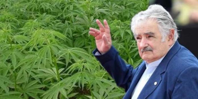 Jeszcze w Tym Roku Urugwaj Rozpocznie Sprzedaż Marihuany, haszysz.info