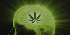 marihuana-alzheimer-medycyna-usa-8356278