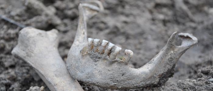 Cannabis w Europie przed 11.000 lat., haszysz.info