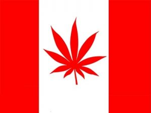 Kanada: Marc i Jodie Emery zatrzymani z powodu handlu marihuaną, haszysz.info