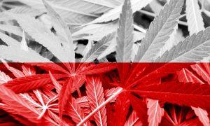 Polski Rząd zagłosował za medyczną marihuaną, haszysz.info