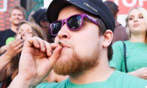 Badania na temat legalizacji cannabisu, haszysz.info