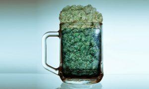 Cannabis może mieć wpływ na przedwczesną śmierć, haszysz.info