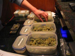 Holenderskie Ministerstwo Sprawiedliwości fałszowało wyniki badań cannabisowych, haszysz.info