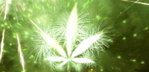 Afryka Południowa legalizuje prywatny użytek marihuany, haszysz.info