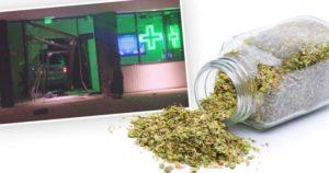 Nastolatkowie ukradli oregano zamiast cannabisu, haszysz.info