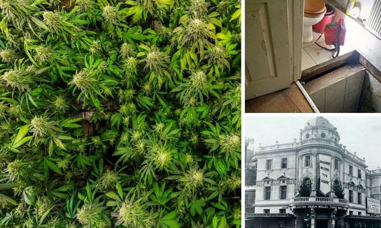 Londyn: Tajemny Tunel Prowadził do Ogromnej Plantacji Marihuany Pod Starym Teatrem, haszysz.info