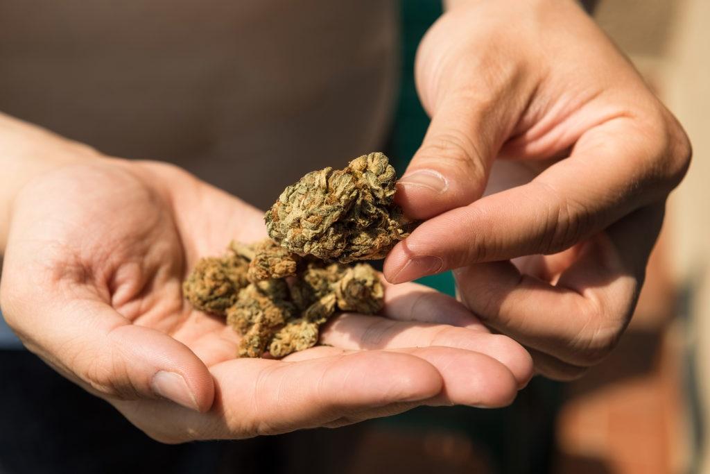 Czy Marihuana Ma Termin Ważności?, haszysz.info