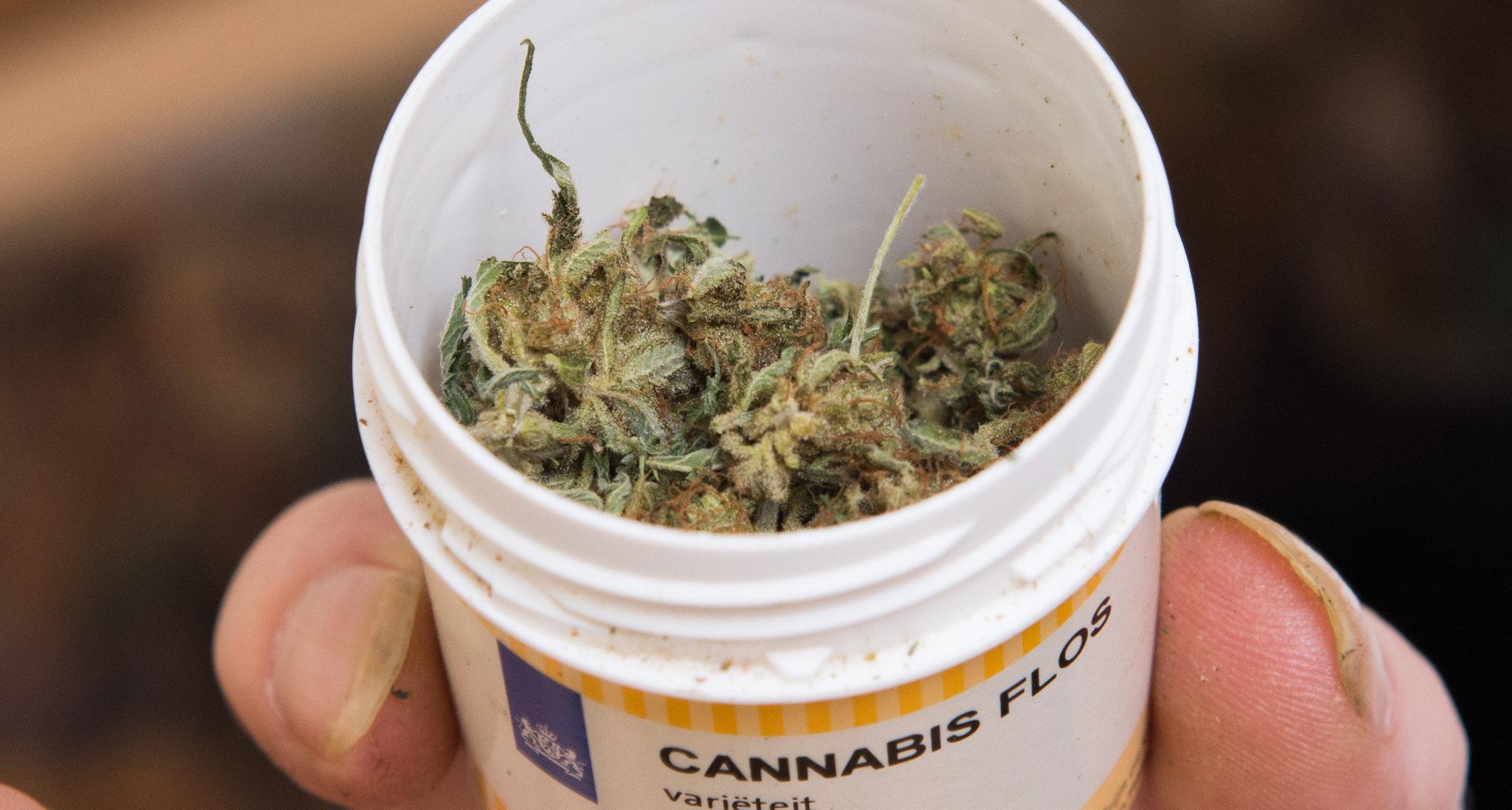 Marihuana i Co Lekarze Powinni Wiedzieć Przy Jej Przepisywaniu, haszysz.info