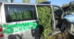 Policja odkryła outdoorową uprawę w rowie, haszysz.info