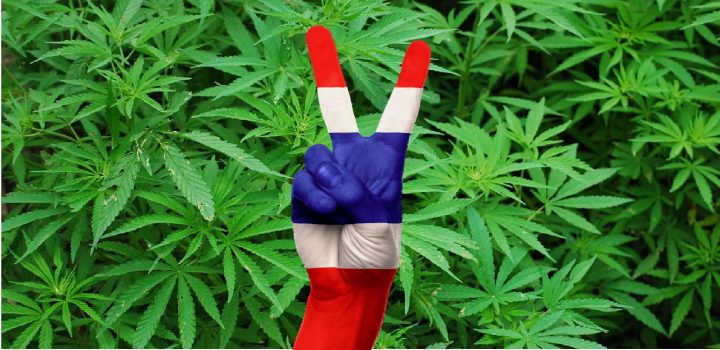 W Tajlandii Przedstawiono Projekt Ustawy o Domowej Uprawie Marihuany, haszysz.info