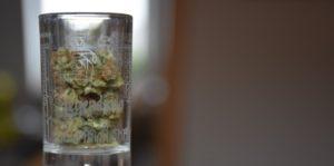 Cannabis do 2030 roku pobije napoje gazowane, haszysz.info