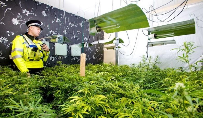 Nowoczesne Formy Niewolnictwa na Cannabisowych Farmach w UK, haszysz.info